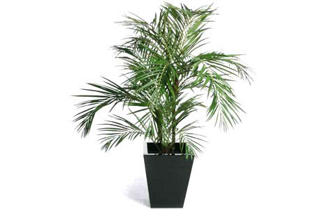 Areca Plant Air Purifier