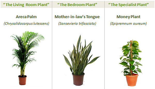 Top Indoor Plants | Best Air Filters for HomeClean Indoor Air ...