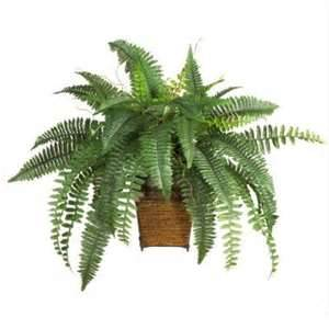 Boston Fern air purifier