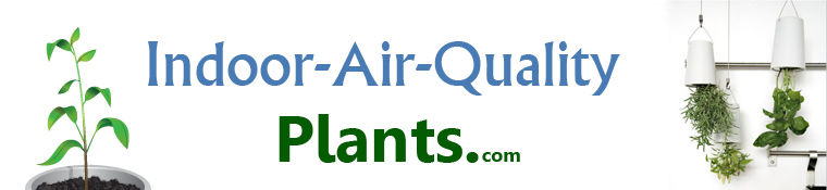 clean air filter indoor houseplants