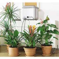 house plants purify indoor air of toxic gases